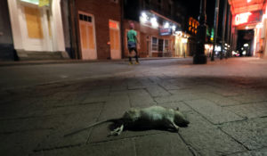 A dead rodent lies on the sidewalk as a lone passerby walks up Bourbon Street, normally bustling with tourists and revelers, in New Orleans, Monday, March 23, 2020. (AP Photo/Gerald Herbert)